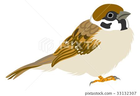 Sparrow Right 33132307