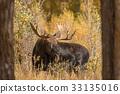 moose, animal, nature 33135016
