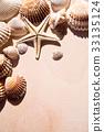 sea shells and star closeup 33135124