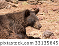 bear, black, animal 33135645
