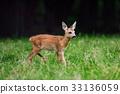Baby roe deer on summer meadow 33136059