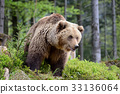 bear, brown, forest 33136064