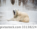 백곰, 흰 곰, 북극곰 33138224