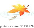 maple, yellow leafe, killifish 33138576