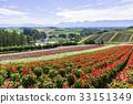 언덕 마을 비 에이 꽃 인 가도의 꽃밭 33151349