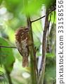 野生鳥類 野鳥 動物 33158556