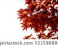 京都 楓樹 紅楓 33158688