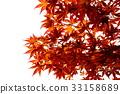 京都 楓樹 紅楓 33158689