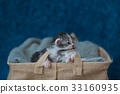 Sleeping beauty kitten 33160935