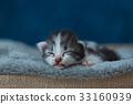 Sleeping beauty kitten 33160939