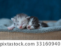 Sleeping beauty kitten 33160940