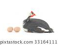 fowl, bird, poultry 33164111