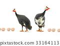 fowl, bird, egg 33164113