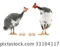 fowl, bird, egg 33164117