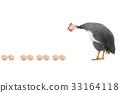 fowl, bird, egg 33164118