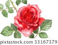 玫瑰 玫瑰花 花朵 33167379