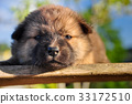 sleep puppy 33172510