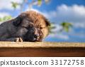 sleep puppy 33172758