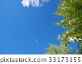 blue sky, early summer, poplar 33173155