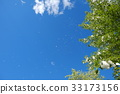 blue sky, early summer, poplar 33173156