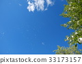 blue sky, early summer, poplar 33173157