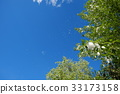 blue sky, early summer, poplar 33173158