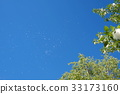 blue sky, early summer, poplar 33173160