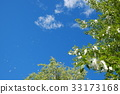 blue sky, early summer, poplar 33173168