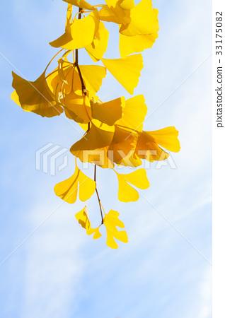Vibrant fall foliage 33175082
