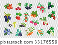 Large set of berries. vector isolated 33176559