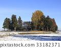 หิมะตกหนักและต้นแปะก๊วย 33182371