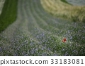 furano, farm, tomita 33183081