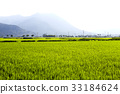 논, 농업, 녹색 33184624