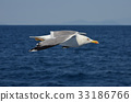 seagull 33186766