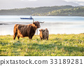 Highland cow with a scottish loch in the 33189281