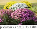 꽃잎, 만개, 꽃 33191388