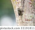 蝗蟲 蟬 夏天 33191811