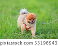 【작은 개] 초원과 포메라니안 33196943