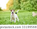 狗 狗狗 宠物 33199568