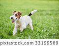 dog outdoors dogs 33199569