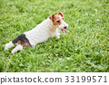 dog outdoors dogs 33199571