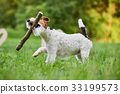 dog outdoors dogs 33199573