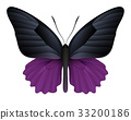 Beautiful butterfly isolated on a white background 33200186