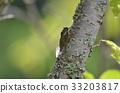 蝗蟲 蟬 蟲子 33203817