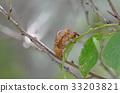 蝗蟲 蟬 蟲子 33203821