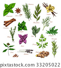 Culinary herb and spice sketch for food design 33205022