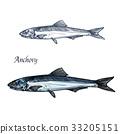 fish, anchovy, food 33205151