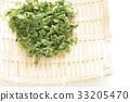 sea lettuce, seaweed, Marine Product 33205470