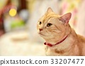 animal, animals, cat 33207477