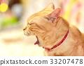 animal, animals, cat 33207478